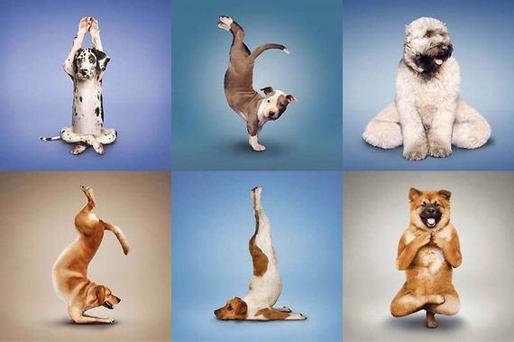 dog, yoga, funny, health, wellbeing