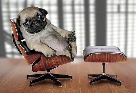 pug, dog, funny, therapy, therapist chair