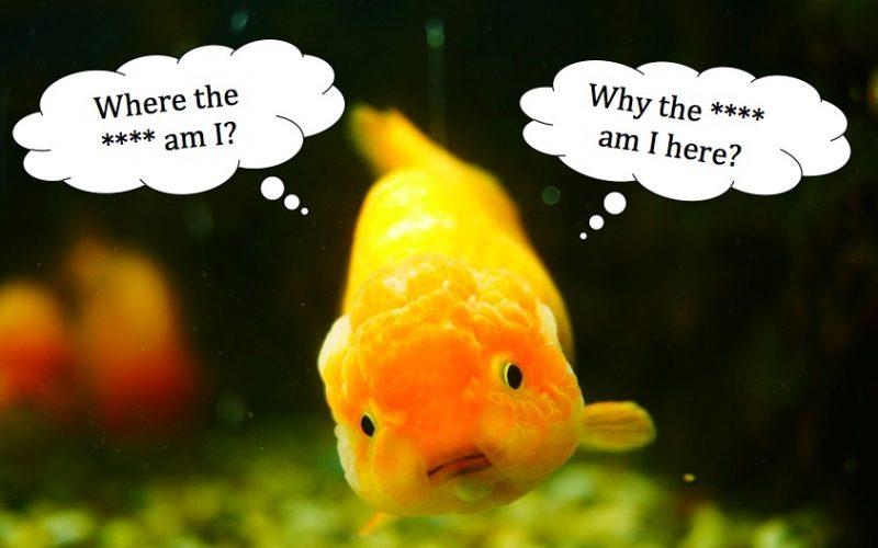 bad memory, goldfish, dumb