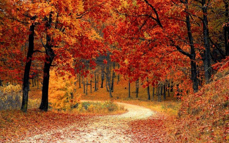 autumn, fall, leaves, september, all i want for september, september wish list