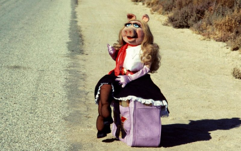 miss piggy, suitcase, luggage, running away, go bag, essentials