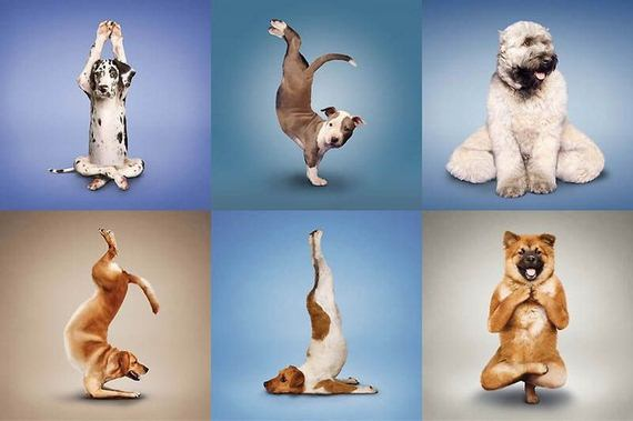 dog, yoga, funny, health, wellbeing