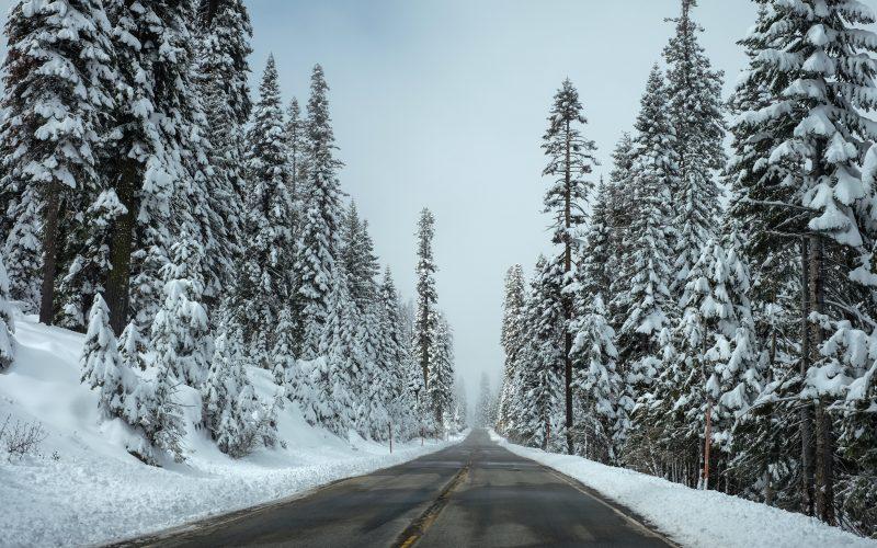 snow, trees, road, white, bleak