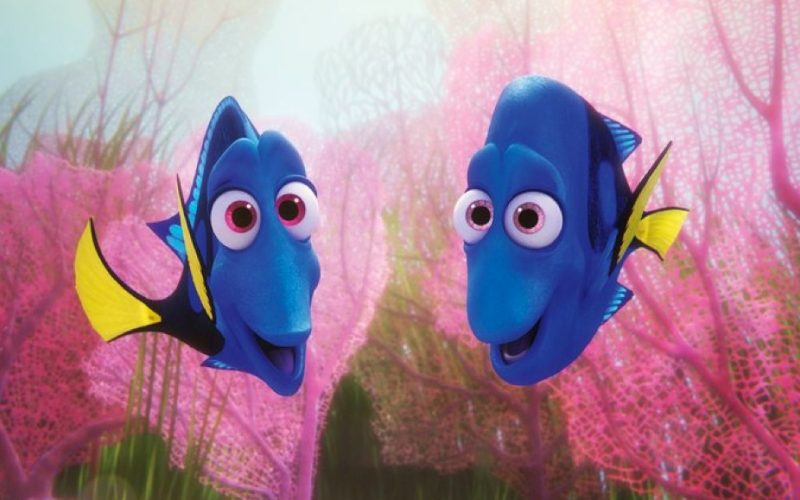finding dory, jenny, charlie, forgetful, goldfish, memory, bad memory, forgetful